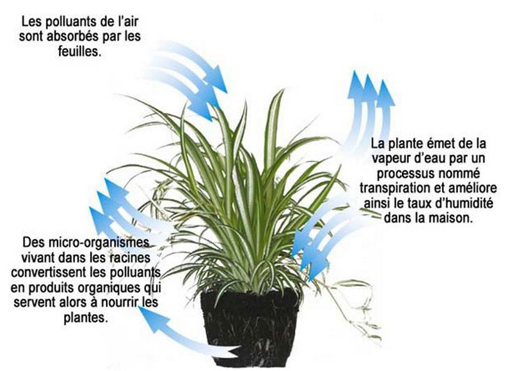 processus-plante-pollution