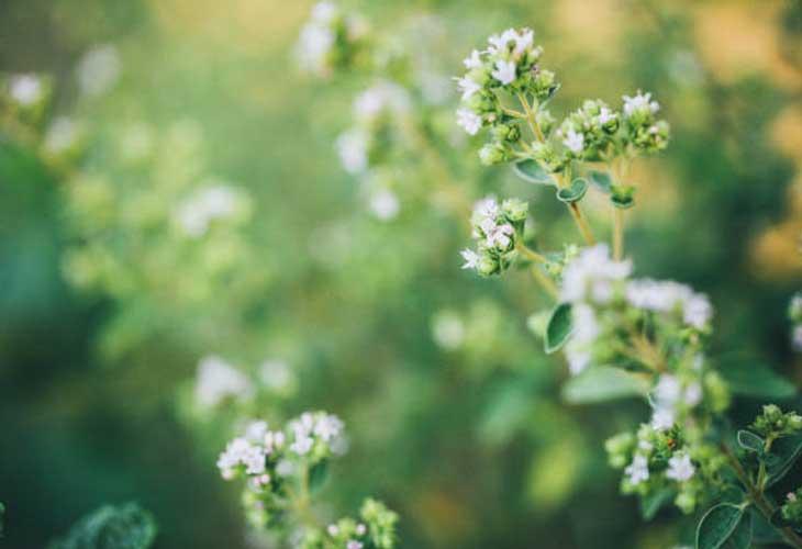 medecine-plante
