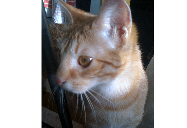 produits-naturels-degats-chat